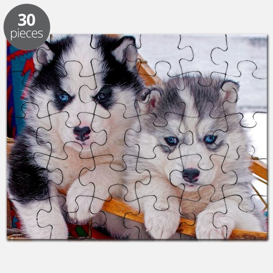 Husky Puppies in sled Puzzle