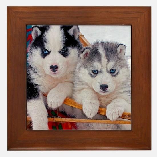 Husky Puppies in sled Framed Tile