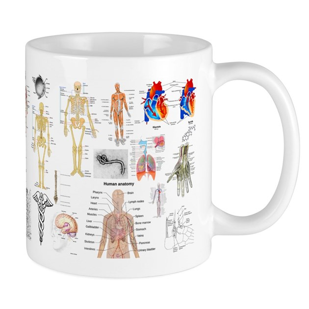 human anatomy charts mugs by bestsellingts. Black Bedroom Furniture Sets. Home Design Ideas