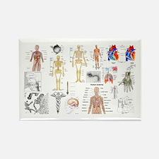 Human Anatomy Charts Magnets