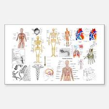 Human Anatomy Charts Decal