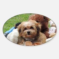 Copper the Morkie Decal