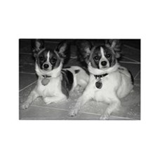 Funny Papillon puppy Rectangle Magnet