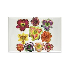 Ten Daylilies Rectangle Magnet (10 pack)