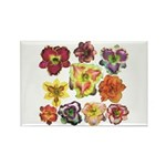 Ten Daylilies Rectangle Magnet (100 pack)