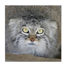 Pallas Cat (Manul) Decorative Tile/Coaster