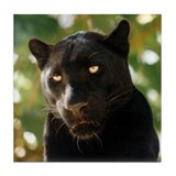 Black panther tiles Drink Coasters