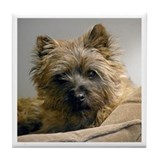Cairns terrier Drink Coasters