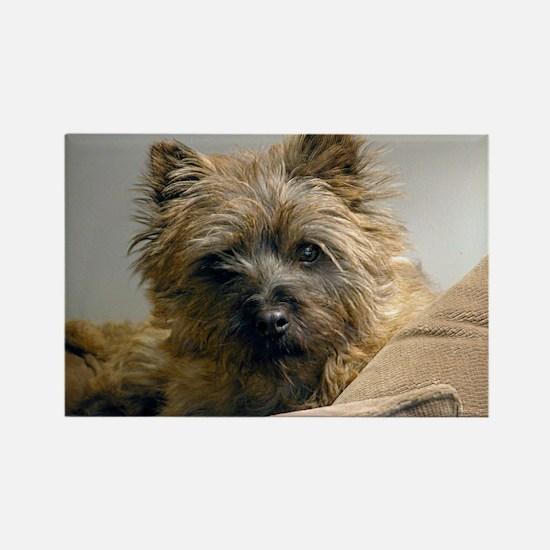 Pensive Cairn Terrier Rectangle Magnet