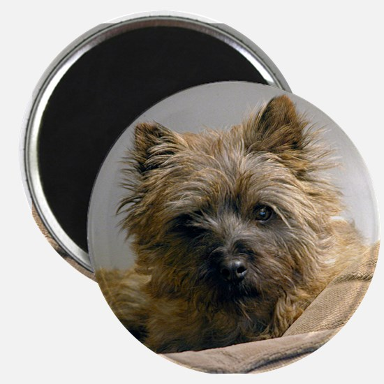 Pensive Cairn Terrier Magnet