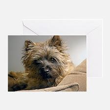 Pensive Cairn Terrier Greeting Card