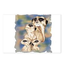meerkat group Postcards (Package of 8)