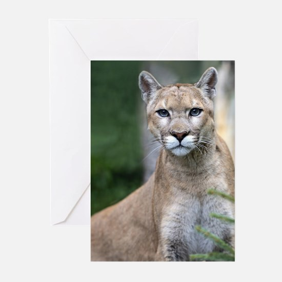 Mountain Lion Greeting Cards (Pk of 10)