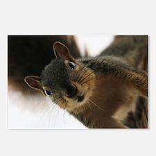 Cute Squirrels Postcards (Package of 8)