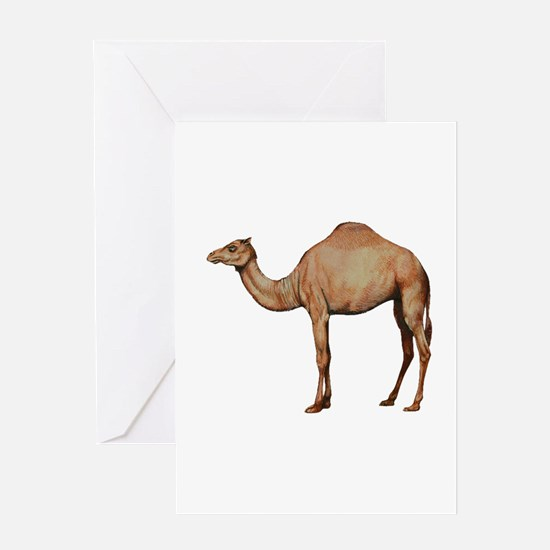 DESERT Greeting Cards