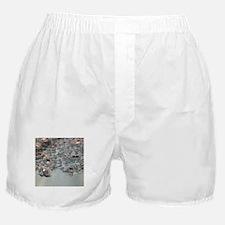 aqua silver sequins lace Boxer Shorts