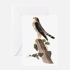 Merlin Falcon Audubon Vintage Art Greeting Cards