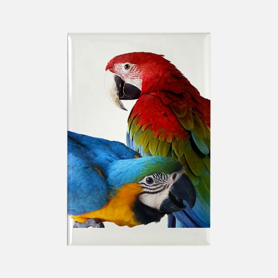 2 Macaws Rectangle Magnet