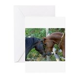 Horses Greeting Cards (10 Pack)