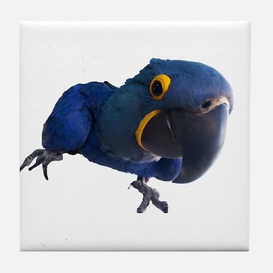 Blu the Hyacinth Macaw Tile Coaster