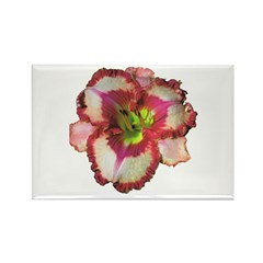 Red Ruffled Daylily Rectangle Magnet (100 pack)