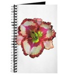 Red Ruffled Daylily Journal