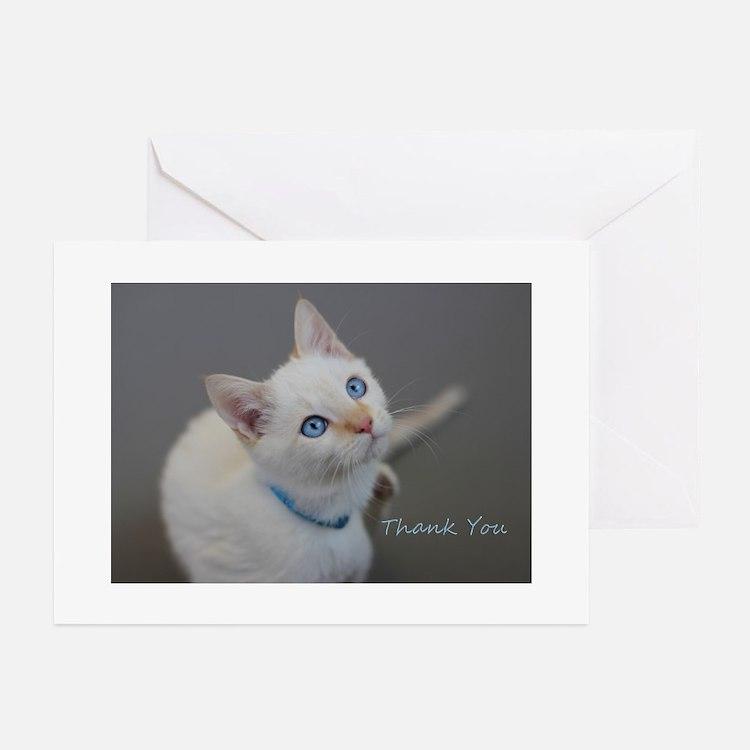 Blue Eyed Kitten Thank You Greeting Cards