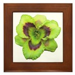 Gold w/ Purple Eye Daylily Framed Tile