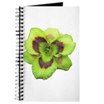 Gold w/ Purple Eye Daylily Journal