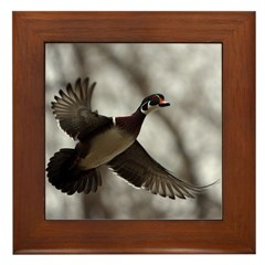 Wood Duck Framed Tile