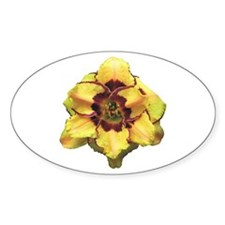 Peach Double Daylily Oval Decal