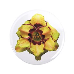 Peach Double Daylily 3.5