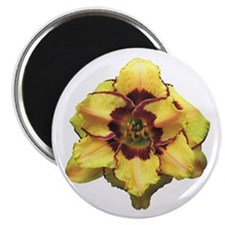 Peach Double Daylily Magnet