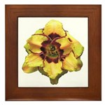 Peach Double Daylily Framed Tile
