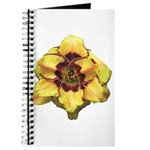 Peach Double Daylily Journal