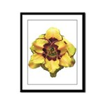 Peach Double Daylily Framed Panel Print