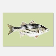 Striper Postcards (Package of 8)