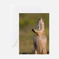 prairie dog alert Greeting Cards