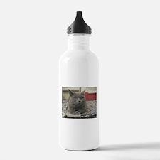 british shorthair gray Water Bottle