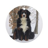 Bernese mountain dog Round Ornaments