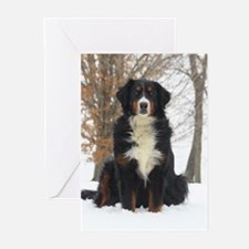Berner in Snow Greeting Cards