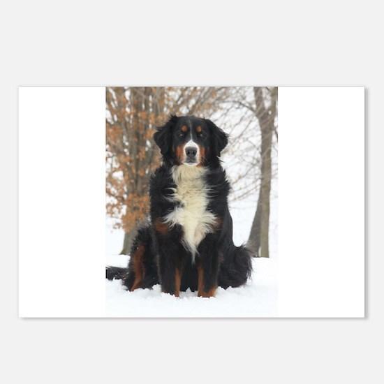 Berner in Snow Postcards (Package of 8)
