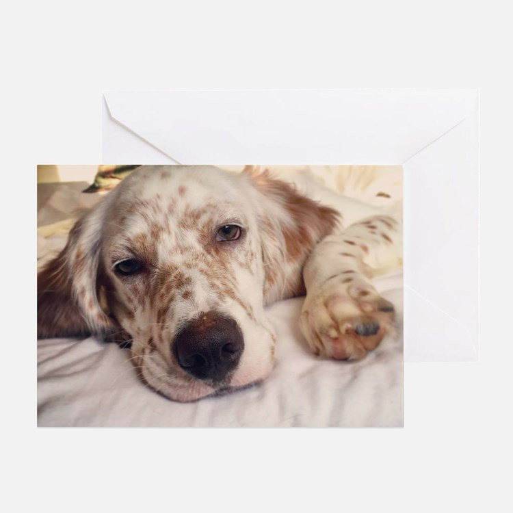 Cute Sleeping dog Greeting Card