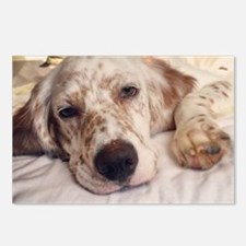 Funny English setter Postcards (Package of 8)