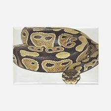 Ball Python Photo Magnets