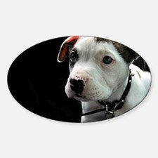Pit Bull T-Bone Puppy Decal