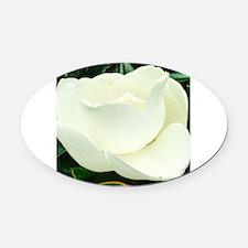 Cute White magnolia Oval Car Magnet