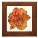 Coral Double Daylily Framed Tile