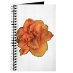 Coral Double Daylily Journal