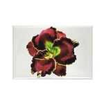 Dark Purple Daylily Rectangle Magnet (100 pack)